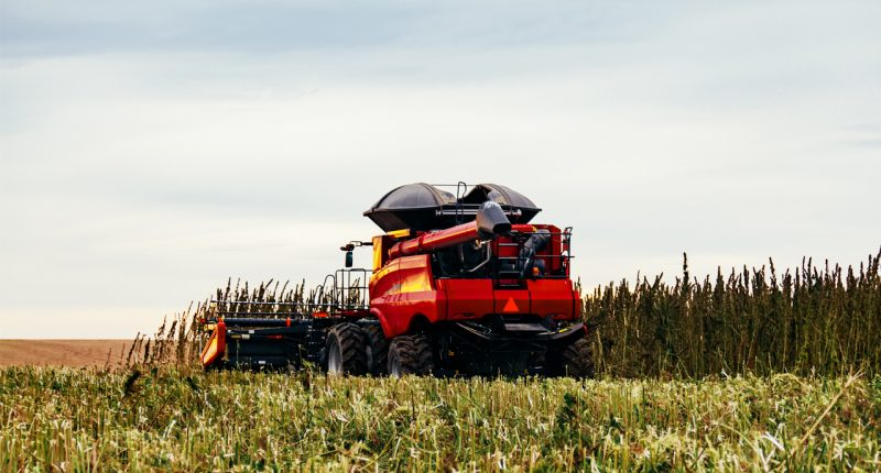 Wide Open Agriculture begins summer hemp trial