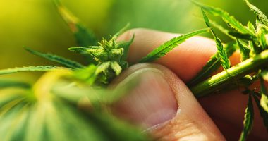 RotoGro closing in on Asian hemp market