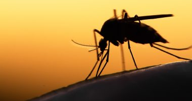 Bio-Gene Technology (ASX:BGT) is using Aussie eucalyptus to treat deadly diseases