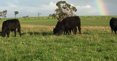 Wide Open Agriculture's (ASX:WOA) Dirty Clean Food forks up 46pc revenue increase