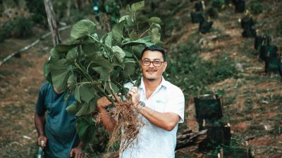 Fiji Kava (ASX:FIJ) - Managing Director, Zane Yoshida - The Market Herald