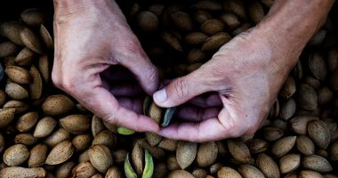 Rural Funds Group (ASX:RFF) prepares almond orchard sale