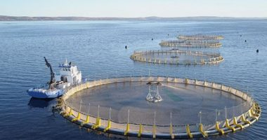 Clean Seas Seafood (ASX:CSS) to launch new products following first-quarter results