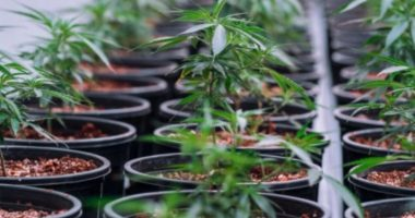 Creso Pharma (ASX:CPH) expects TGA's cannabidiol decision next month