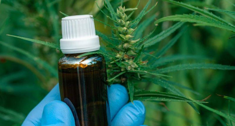 Cann Global (ASX:CGB): Disrupting the lucrative Australian cannabis market