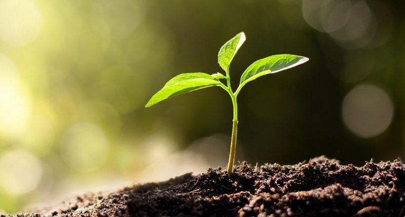 SECOS Group (ASX:SES)  enjoys strong quarter of growth
