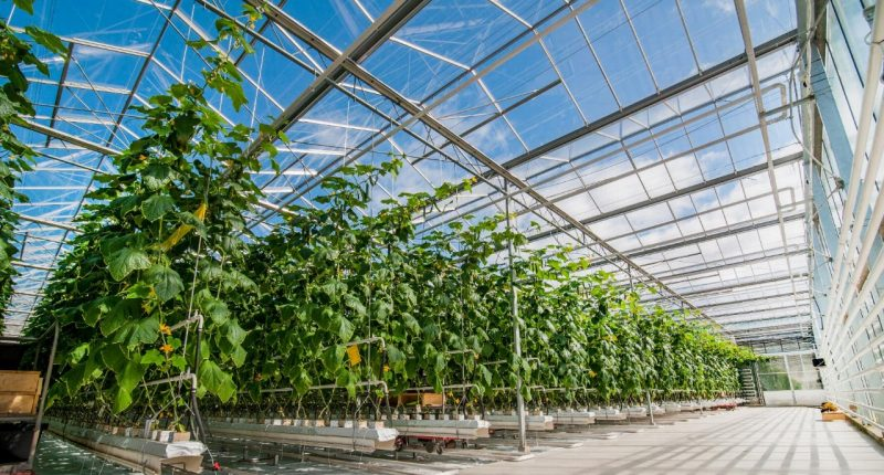 ClearVue Technologies (ASX:CPV) advances world-first clear solar glass greenhouse
