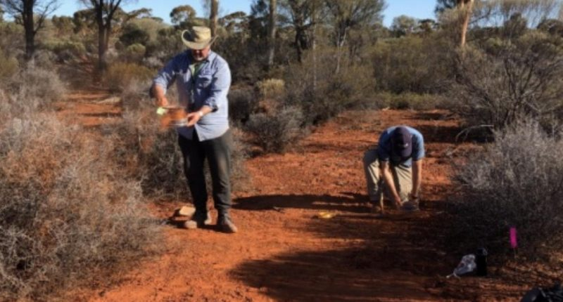 Kula Gold (ASX:KGD) finds copper mineralisation at Brunswick