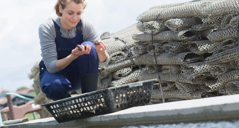 Seafarms Group (ASX:SFG) signs Canstruct to lead Project Sea Dragon