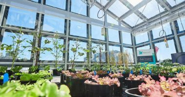 ClearVue Technologies (ASX:CPV) puts the green back in greenhouses