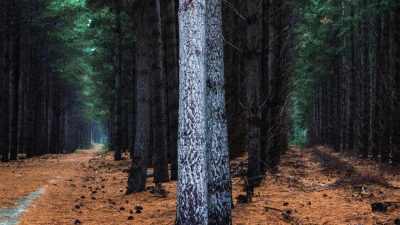 AXA IM completes Australia's biggest forestry deal in over a decade