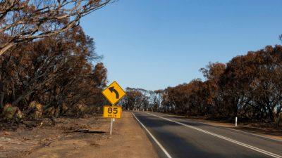 Bushfire-salvaged timber on Kangaroo Island to be used to build up to 10,000 homes